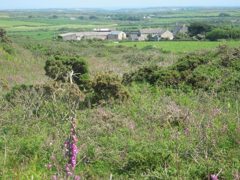 tredinney-farm-cottage-8
